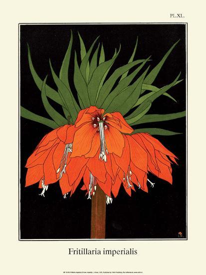 Botanical Print, Crown Imperial, 1905-Luite Klaver-Art Print