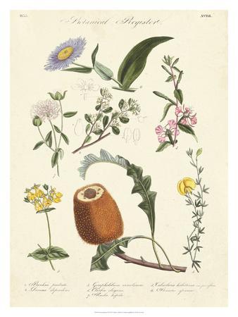 https://imgc.artprintimages.com/img/print/botanical-register-ii_u-l-f8hsjo0.jpg?p=0