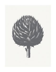 Artichoke (Ivory & Gray) by Botanical Series