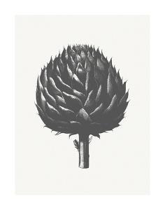 Artichoke (Ivory & Ink ) by Botanical Series