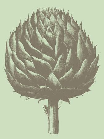 Artichoke, no. 11