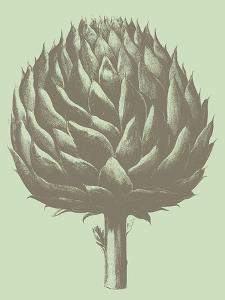 Artichoke, no. 11 by Botanical Series