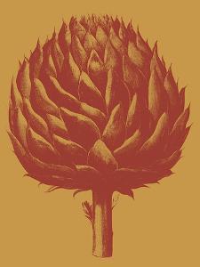Artichoke, no. 15 by Botanical Series