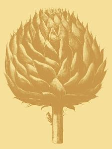Artichoke, no. 19 by Botanical Series