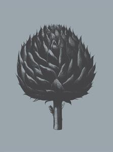 Artichoke (Slate & Ink) by Botanical Series
