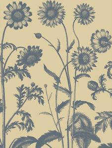 Chrysanthemum 1 by Botanical Series