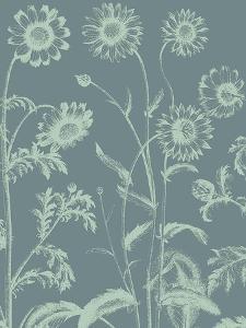 Chrysanthemum, no. 7 by Botanical Series