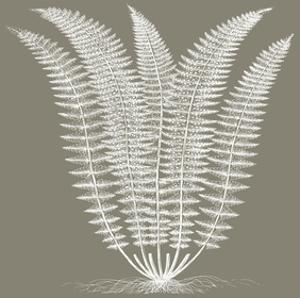 Fern (Burlap & Ivory) by Botanical Series