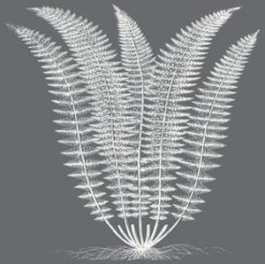 Fern (Gray & Ivory) by Botanical Series