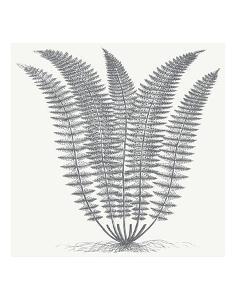 Fern (Ivory & Gray) by Botanical Series