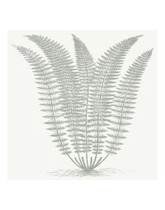 Fern (Ivory & Sage) by Botanical Series