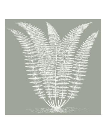 Fern (Sage & Ivory)