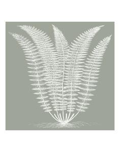 Fern (Sage & Ivory) by Botanical Series