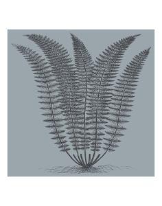 Fern (Slate & Ink) by Botanical Series