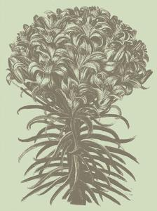 Lilies 11 by Botanical Series