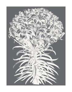 Lilies (Gray & Ivory) by Botanical Series