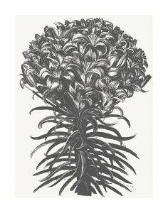 Lilies (Ivory & Ink) by Botanical Series