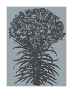 Lilies (Slate & Ink) by Botanical Series