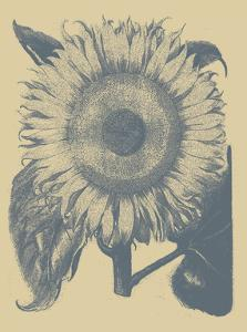 Sunflower 1 by Botanical Series