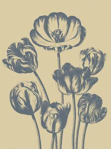 Tulip 1 by Botanical Series