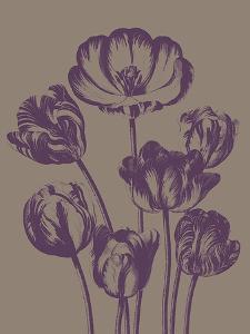 Tulip, no. 14 by Botanical Series