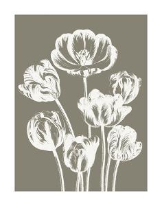 Tulips (Burlap & Ivory) by Botanical Series