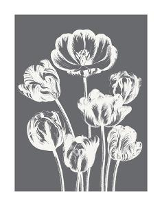 Tulips (Gray & Ivory) by Botanical Series