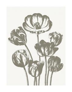 Tulips (Ivory & Burlap) by Botanical Series