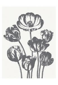 Tulips (Ivory & Gray) by Botanical Series