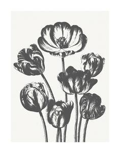 Tulips (Ivory & Ink) by Botanical Series