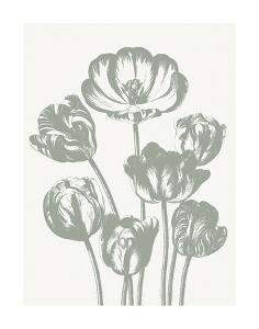 Tulips (Ivory & Sage) by Botanical Series