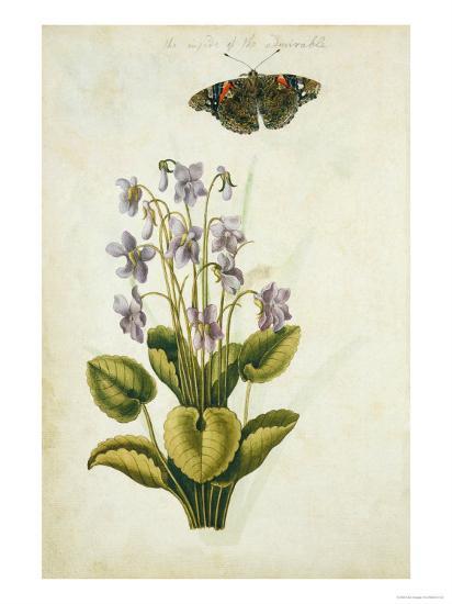 Botanical Study of a Violet-Jacques Le Moyne De Morgues-Giclee Print