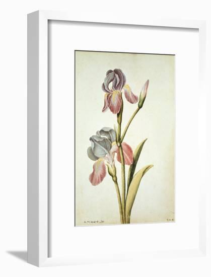 Botanical Study of an Iris-Jacques Le Moyne De Morgues-Framed Giclee Print