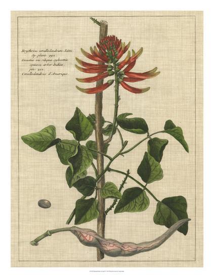 Botanical Study on Linen IV-Vision Studio-Giclee Print