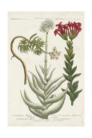 https://imgc.artprintimages.com/img/print/botanical-varieties-i_u-l-q19bp170.jpg?p=0