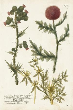 https://imgc.artprintimages.com/img/print/botanical-varieties-ii_u-l-q19box30.jpg?p=0