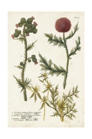 https://imgc.artprintimages.com/img/print/botanical-varieties-ii_u-l-q19boxe0.jpg?p=0