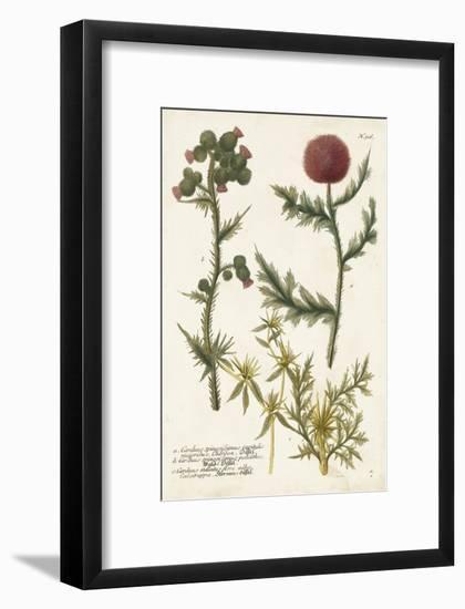 Botanical Varieties II-Weinmann-Framed Art Print