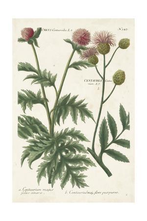 https://imgc.artprintimages.com/img/print/botanical-varieties-iii_u-l-q19bplv0.jpg?p=0