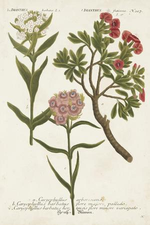 https://imgc.artprintimages.com/img/print/botanical-varieties-iv_u-l-q19bpnw0.jpg?p=0