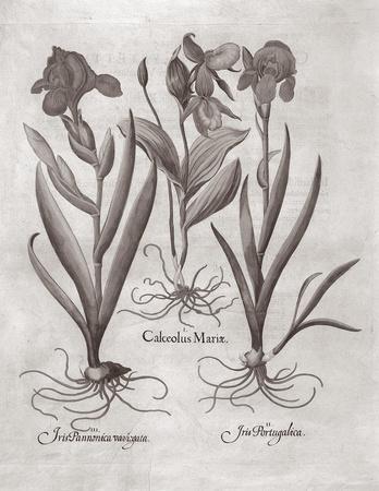 https://imgc.artprintimages.com/img/print/botanical-viii_u-l-f3tet40.jpg?p=0