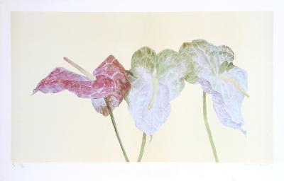Botanical-Carol Ann Bolt-Collectable Print