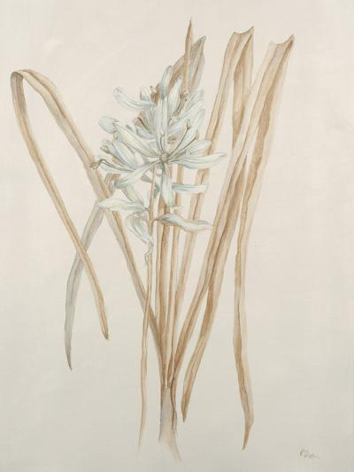 Botanicals V-Rikki Drotar-Giclee Print