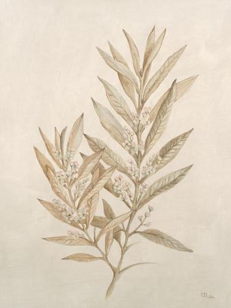https://imgc.artprintimages.com/img/print/botanicals-viii_u-l-q113ity0.jpg?p=0