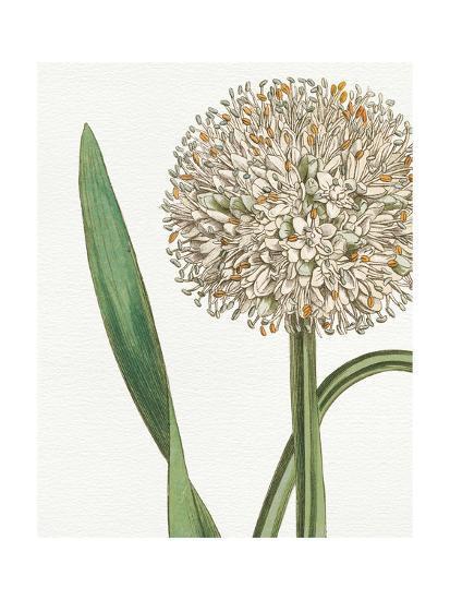 Botanique Blue II on White No Words-Wild Apple Portfolio-Art Print