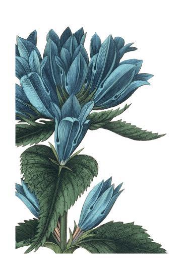 Botanique II No Words-Wild Apple Portfolio-Art Print
