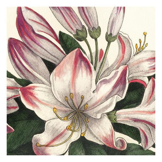 Botanique Square II-Hugo Wild-Art Print