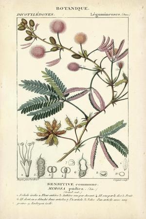 https://imgc.artprintimages.com/img/print/botanique-study-in-pink-iv_u-l-q1bh90f0.jpg?artPerspective=n