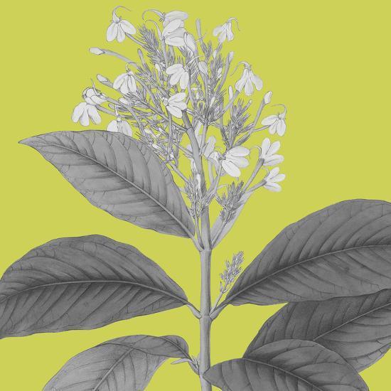Botaniska V-Maria Mendez-Giclee Print