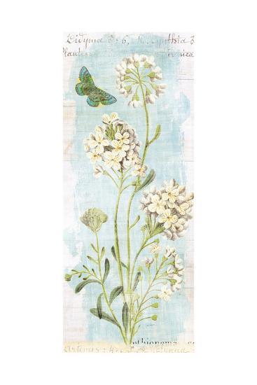 Botany Blue II-Sue Schlabach-Art Print